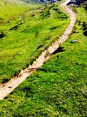 IMG_2167 (Jashir Siddiqui) Tags: pir panj sanctuary bird muree gali dunga park national ayubia nathiagali moshpuri mukeshpuri