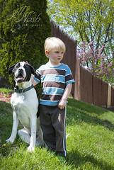 146/366 (grilljam) Tags: puppy spring buddies seamus chillin bros 9months 4yrs bitzer 366days may2016 bulldoglabmix
