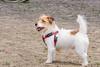 16-05-15_untitled_488 (Daniel.Lange) Tags: dog philadelphia dogs dogdayafternoon spado columbussquarepark
