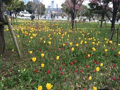 Odaiba Tulipans (Arikelo) Tags: flowers tokyo front odaiba gundam tulipans
