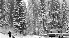 A Rare California Winter Forest Black and White (844steamtrain) Tags: california camera old travel trees winter white snow history film tourism america forest truck outside outdoors photography photo big scenery flickr technology outdoor events scenic saturday slide scene science adventure western vehicle environment redwood wilderness cliche 844steamtrain