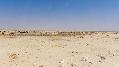 DSC00900-20150925 (C&P_Pics) Tags: panorama birds na zebra namibia scenes ostriches oryx springbok burchellszebra etoshanationalpark oshana bluewildebeast hartmansmountainzebra okaukuejocamptodolemitecampandhobarterelodge