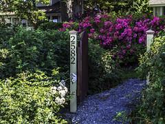 Welcome (Tony Tomlin) Tags: flowers garden gate crescentbeach crescentbeachbc