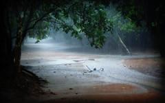 Rain (Rekha Prasad) Tags: rain cambodia siemreap nature landscape seasons rainyday preahkhan
