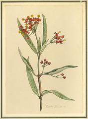 Anglų lietuvių žodynas. Žodis poison milkweed reiškia nuodų milkweed lietuviškai.