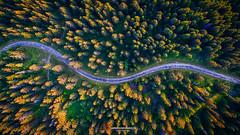 Deep Forest (L'Empreinte Photographie - URBEX) Tags: drone dji phantom 3 p3a aerial aerialcinematography aerialphotography explore paysages landscape scenery forest foret belledone sunset grenoble chamrousse lempreintephotographie