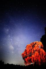 star (kon!) Tags: pink night cherry star d700 ainikkor20mmf4