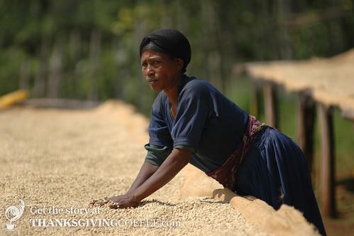 Drying & Turning Coffee in Ethiopia