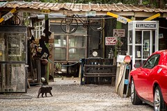 The Shed in Mississippi (Ryan Stoddard) Tags: usa cat mississippi chat gato