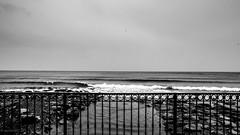 - posti in piedi in paradiso (aesse_1987) Tags: blackandwhite bw seagulls canon italia mare liguria cielo 1740mm 6d alassio savona eos6d