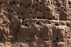 bird's nests (yasar metin) Tags: bird birds turkey turkish turk teknik trk nests tebessm tutku tutunmak