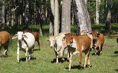 2100 Myall Creek Rd, Bora Ridge NSW