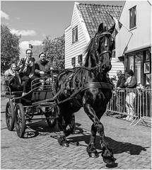 Koningsdag Ransdorp (vrijstaat) Tags: street people bw horse holland blancoynegro netherlands monochrome photography candid nederland streetphotography bn zwart wit paard ringsteken ransdorp straatfotografie powershotg1x