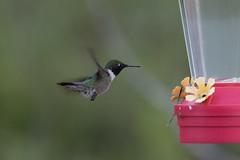 birds-7847