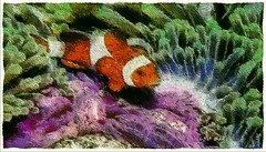 Clown among anemonas - Payaso entre Anemonas (Leo Bar) Tags: fish texture nature painting aquarium artwork newengland tropical northeast artdigital awardtree