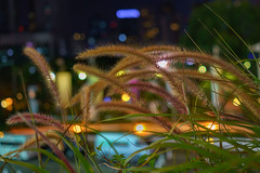 Night Time In The City Garden (Thaiexpat) Tags: park flowers floral thailand lights bangkok may nightscene 2016 rx1rii