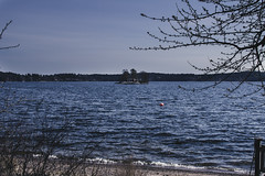 Sndagspromenad vid Elfsviks grd (sophiamaule) Tags: sea nature stockholm liding havet vr vitsippor sndag elfsvik