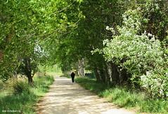 Un paseo por Autol (kirru11) Tags: espaa hojas persona rboles camino paseo hombre piedras canonpowershot seor ramas larioja hierva viaverde autol kirru11 anaechebarria