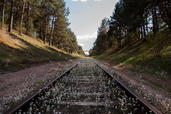 Beautiful traintracks (modestmoze) Tags: road wood travel flowers blue trees sky plants brown white green nature grass lines yellow metal clouds outside outdoors spring rust warm long shadows close view may tracks rusty sunny going hills bushes planks pinetrees lithuania vilnius 2016 500px