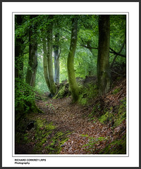 Pen-y-Bos Track (Chalky666) Tags: trees tree leaves forest westsussex path footpath southdowns pinnaclephotography