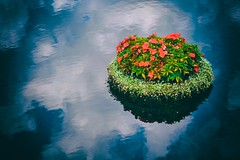 Floating Flowers EPCOT (spey2008) Tags: flowers blue epcot floating