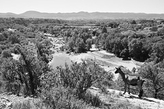 (Leela Channer) Tags: trees blackandwhite bw france nature animal landscape mammal scenery goat hills valley creature ungulate ardeche waterscape chassezac hameaudesbuis