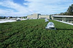 Korematsu Middle School Gym - green roof installation in progress (LiveRoof) Tags: california plants sustainability greenroof portolavalley livingroof plantedroof liveroof korematsumiddleschool florasource