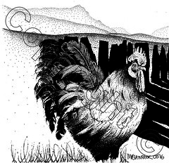 Cockerel and Cadair Idris (myfanwy.brewster) Tags: pets texture chicken animals beak feathers wallart snowdonia inkdrawing farmanimals stylized handdrawn cockerel pointillism cadairidris petportraits commissions welshlandscape slatefence welshart risingvalleymist animalinkdrawingscouk