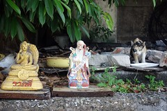 which one to pray to? (the foreign photographer - ) Tags: cat thailand image god bangkok buddha sony chinese idol bang bua bangkhen rx100 dscjun112016sony
