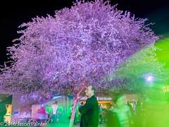 Gondwana Light Lab (The Electric Canvas) (Japester68) Tags: city light sculpture tree animal festival night dinosaur outdoor sydney vivid australia event projection nsw aus prehistoric 2star