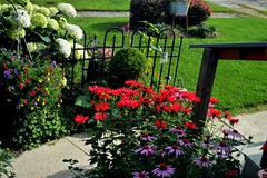 fence along the front walk (Lana Pahl / Country Star) Tags: fencefriday