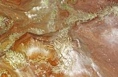 Anthodites (Skyline Caverns, Front Royal, Virginia, USA) 20 (James St. John) Tags: anthodite anthodites speleothem calcite aragonite skyline caverns virginia ordovician beekmantown group rockdale run formation front royal warren county