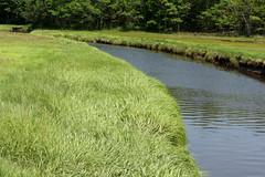 2016-07-17 Rachael Carson NWR (95) (Paul-W) Tags: vacation birds river march marine walk maine wells hike estuary trail saltmarsh saltpan 2016 rachelcarsonnationalwildliferefuge