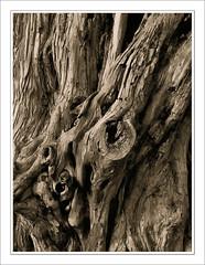 STRUTTURE 4 (fauglia2003) Tags: alberi grafica strutture
