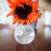 Sunflower, Perk Presidio Cafe, #3