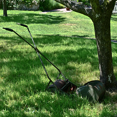 Grass needs mowing (pnjavery) Tags: mower lawn monkshouse grass orchard