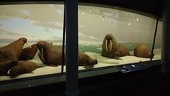 IMG_20160724_171226228 (NR Intercmbio) Tags: ny 20160724 cinema bubba gump camaro shrimp museu animais liga justia historia nrintercambio american