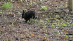 DSC_3347 (mavnjess) Tags: 15 june 2016 vicenza italy italia coniglio coniglios rabbit rabbits bunny bunnies