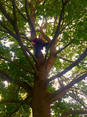 Lost Boy (JohnsonConnorDTE) Tags: nature person tree missoula montana colorful sun green adventure