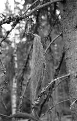 ProminentPostCLA031 (A.Sundell) Tags: old bw nature landscape blackwhite sweden tmax antique voigtlander natur retro d76 german epson sverige v600 tmax400 voigtländer westgermany landskap svartvit västmanland ultron prominent surahammar voigtländerprominent ultron50mmf2 voiglaender tmaxfix