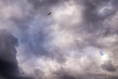 Cloudy Sky, Hamburg (Philipp Janssen) Tags: sky seagulls storm clouds deutschland hamburg drama sturm