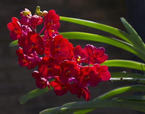 Thailand 2015 - Orchideen