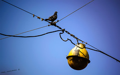 the message of a   shadow (mare_maris (very slow)) Tags: city morning blue sky urban bird colors lines birds yellow skyscape outdoors photography daylight spring nikon european colours shadows message skyscrapers control image streetlamps pigeon wildlife horizon border shapes streetphotography peaceful x explore greece cables wires pajaros april powerline perched geometrical identification dedicated ornithology birdwatching oiseau colombe uccello shading 2015 diagonally virtualworld textrures migrate dayshot colomba ελλάδα πόλη σκιά περιστέρι crosswise ελλαδα electricutility blueskybackground ουρανόσ λάμπα skytones privatenetwork atticsky maremaris electiclamp