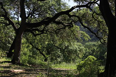 oaks_bull_creek_6D1895