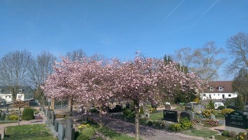 Auf dem Friedhof von Selzen