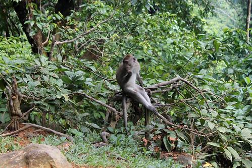 20150224_110357 Pusuk Monkey Forest, Lombok