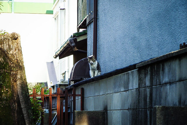 Today's Cat@2015-05-08