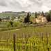 Chianti Country-4