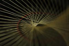 geometrical model II (notpushkin) Tags: geometry mathematics geometrie mathematik fadenmodell