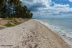 Pantai Dai Eko, Sawu Barat (Sekitar) Tags: sea beach coral indonesia island laut dai batu pulau pantai nusa ntt eko barat sabu nusatenggara savu sawu nusatenggaratimur